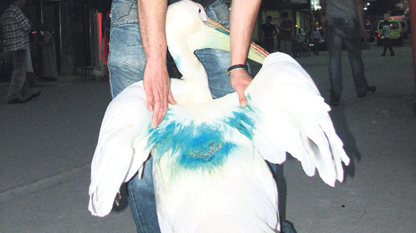 Pelikan Uğur'a bıçaklı saldırı!