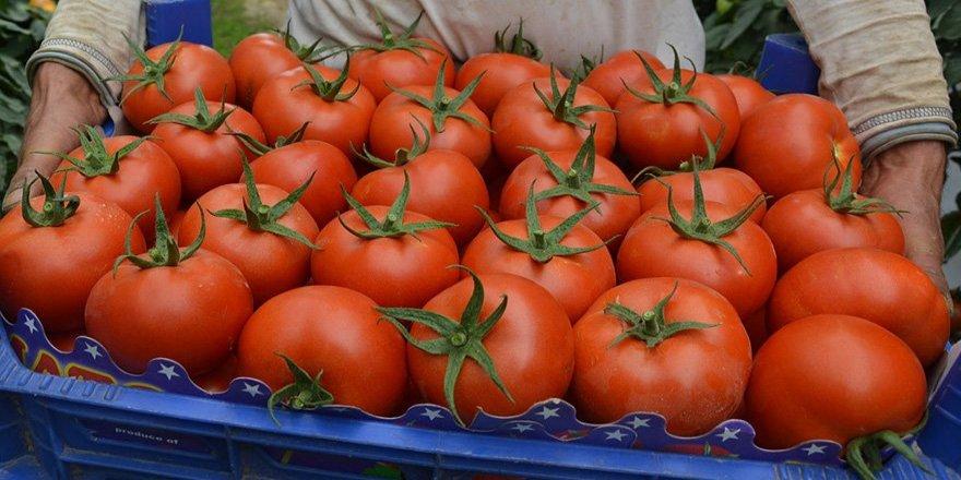 Rusya'dan flaş domates açıklaması