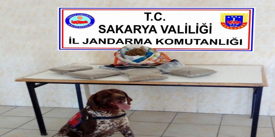 Sakarya'da 2 Kilo Bonzai Ele Geçirildi
