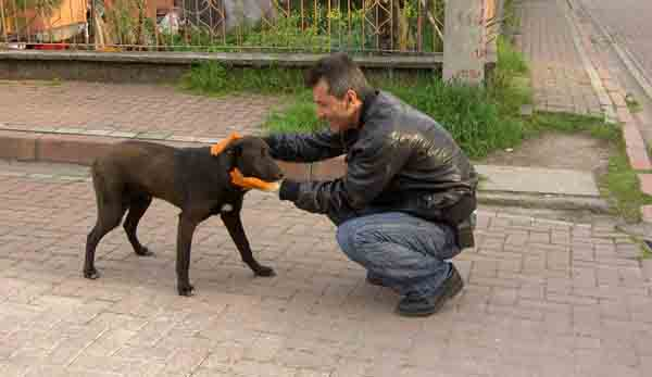 Sokak hayvanlarına önemli koruma!