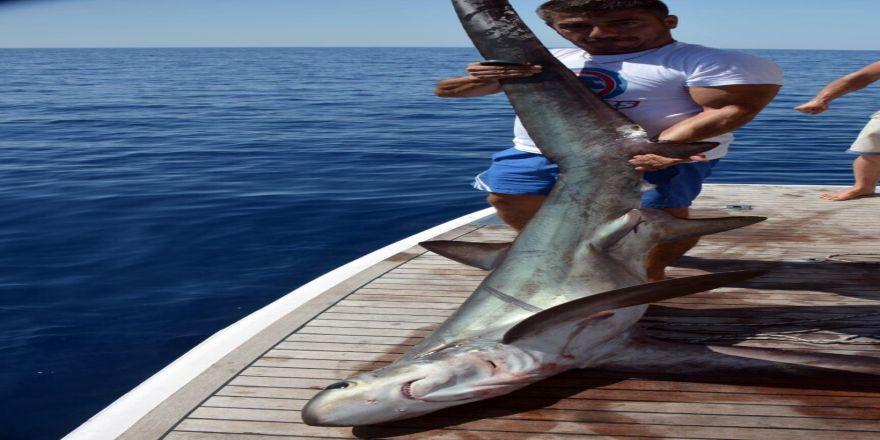 Yakaladığı Köpek Balığını Özgür Bıraktı