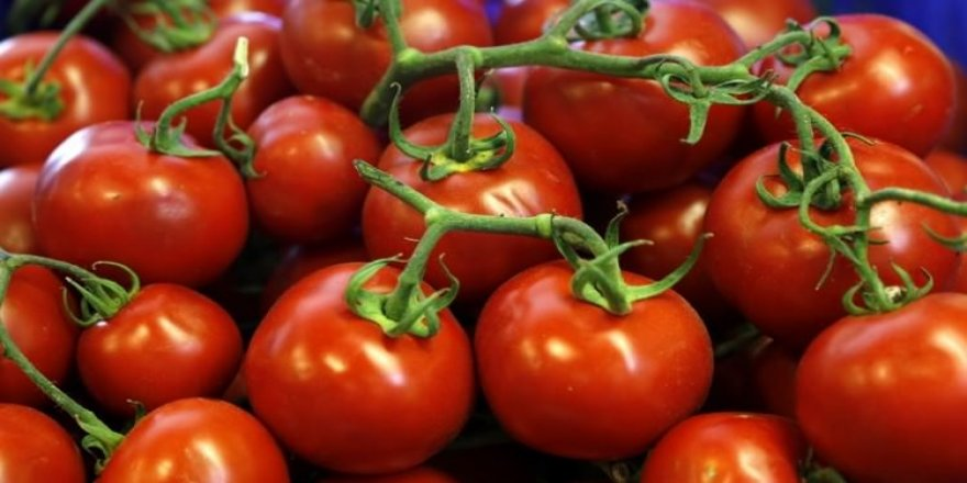 Rusya'dan domates misillemesi