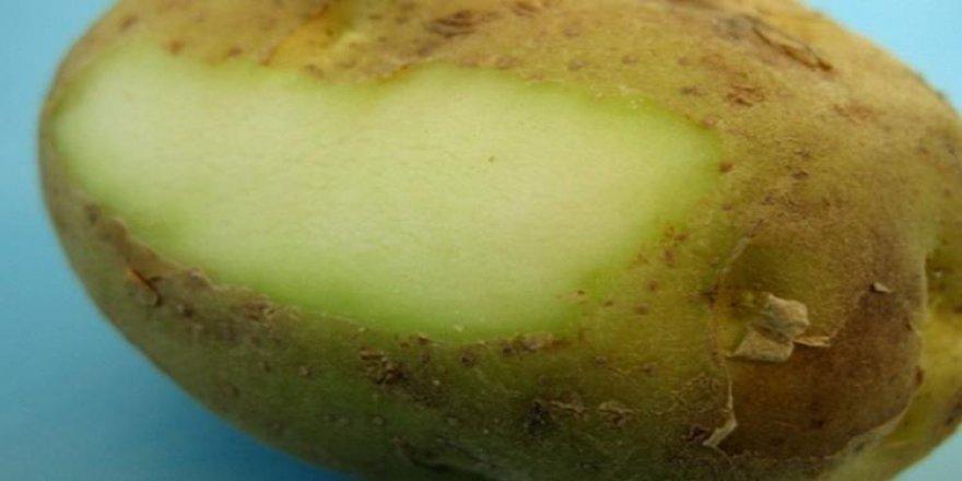 Patatesin içi yeşile dönüyorsa dikkat edin!