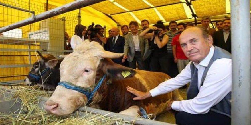 Topbaş'ın kurbanlığı 1200 kilo