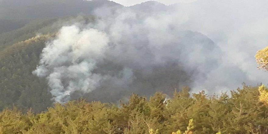 PKK'lılar Amanos Dağlarını ateşe verdi!