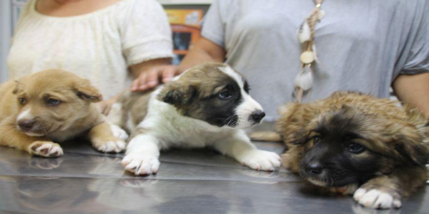 3 Yavru Köpeğe İşkence Yapan Askere Soruşturma