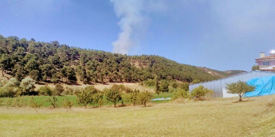 Bursa'da Orman Yangını Çıktı