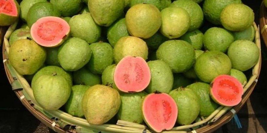 Kansere karşı yerli üretim guava