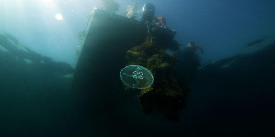 Marmara'daki Mercanlar Böyle Kurtarıldı