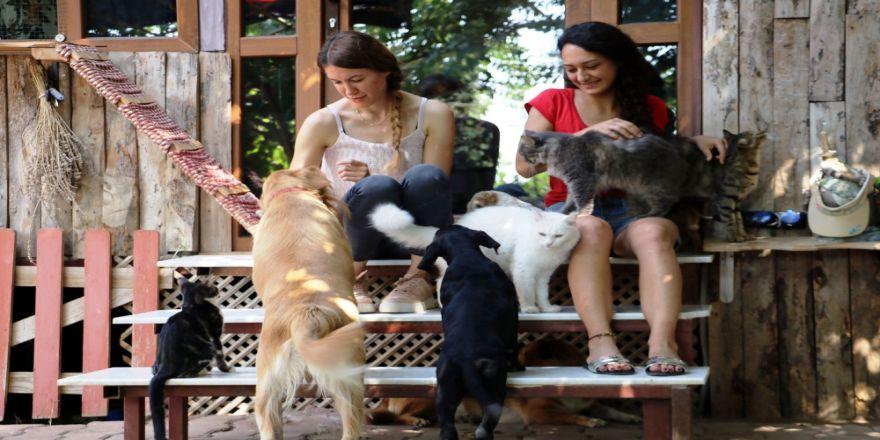 Emekli Maaşıyla Evlerinde 80 Hayvan Besliyorlar