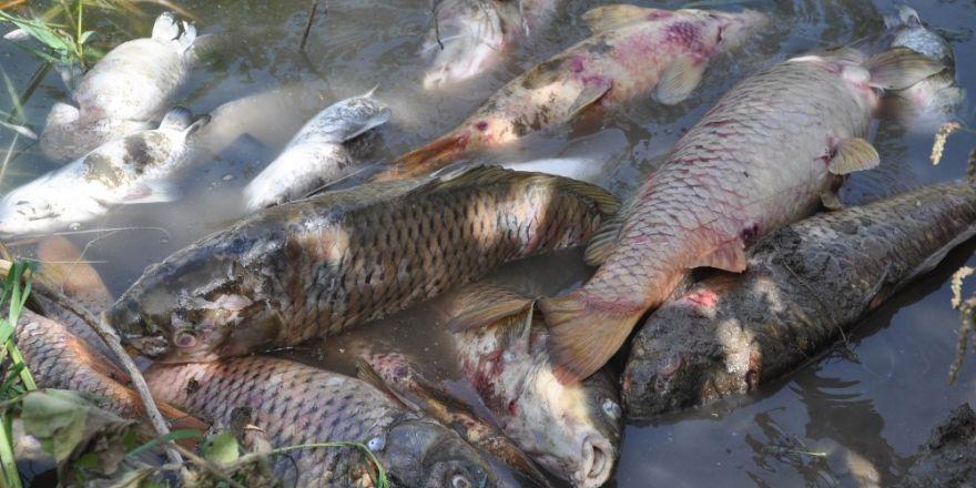 Türkiye Şeker Fabrikası'ndan 'Balık Ölümleri' Açıklaması