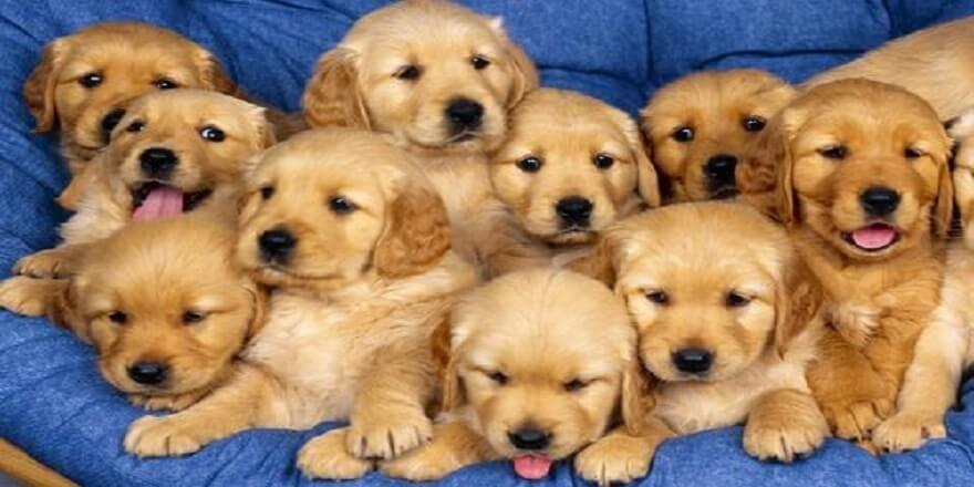 Tarz Mama Köpek Mamaları İle Gelişim Köpeklerde