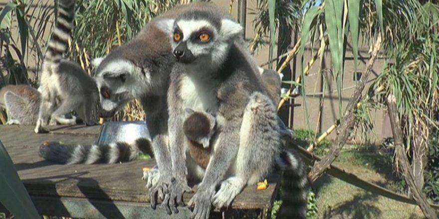 Hayvanat Bahçesi'nde doğum heyecanı