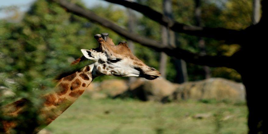 Sonbaharda Hayvanat Bahçesine Büyük İlgi