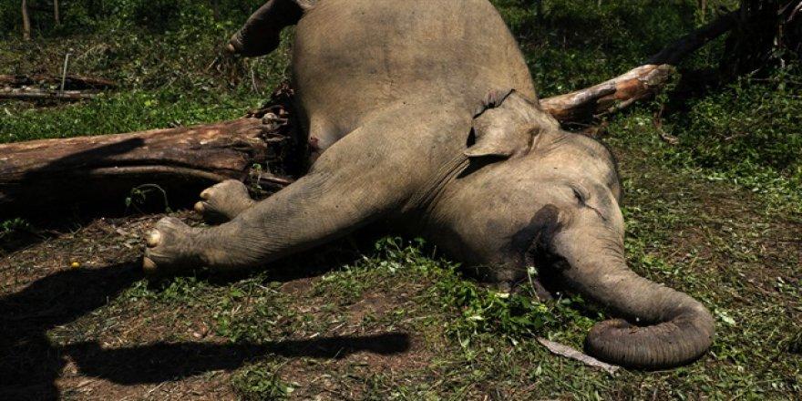 111 bin fili katlettiler!