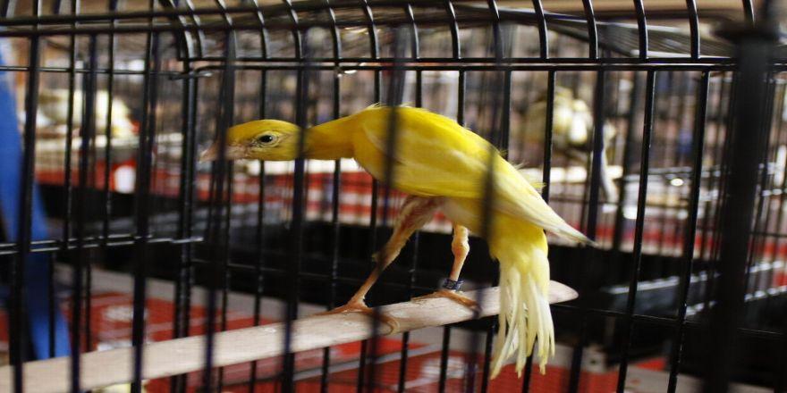 Türkiye'nin En Güzel Kuşları Antalya'da Toplandı