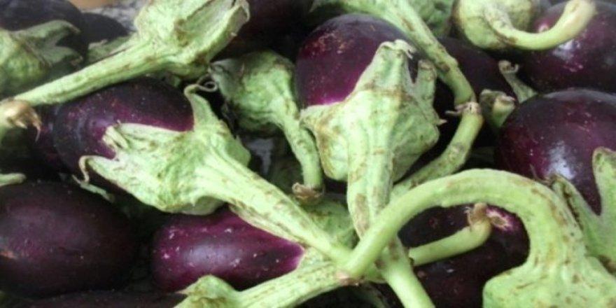 Patlıcan saplarının mucizevi etkisi