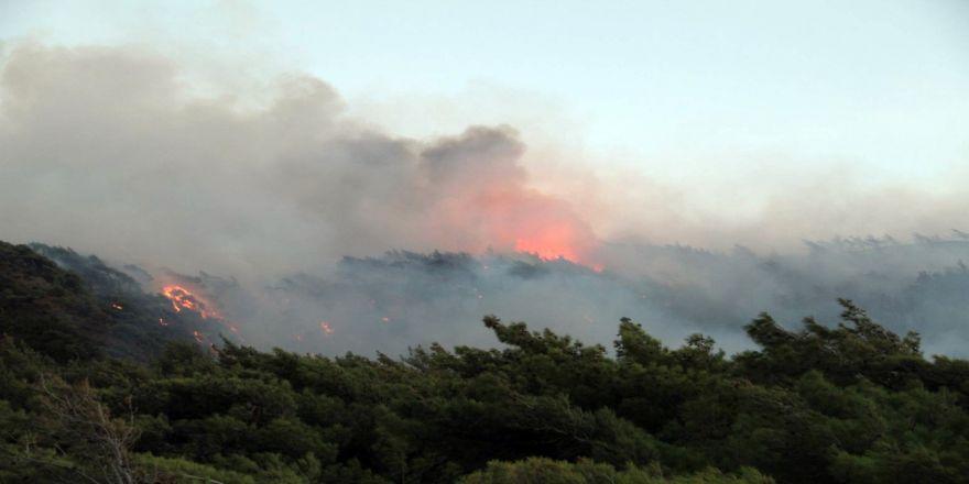 Datça'da Yangın Söndürüldü: 1 Gözaltı Var