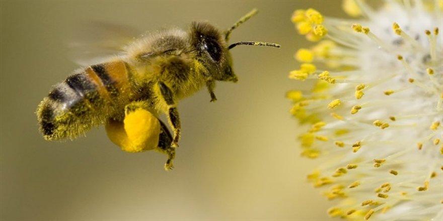 Bir arı bir kilo bal için 14 milyon çiçeğe konuyor