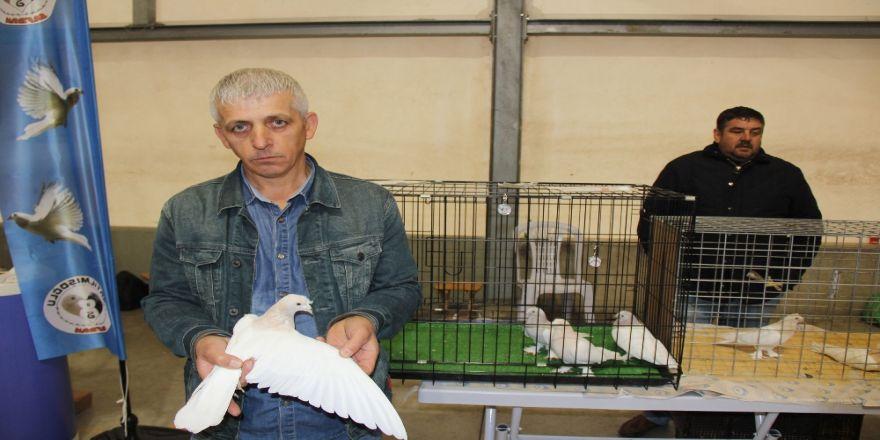 Bu Güvercinler 100 Bin Tl: Bunlar İçin Evlenmedim