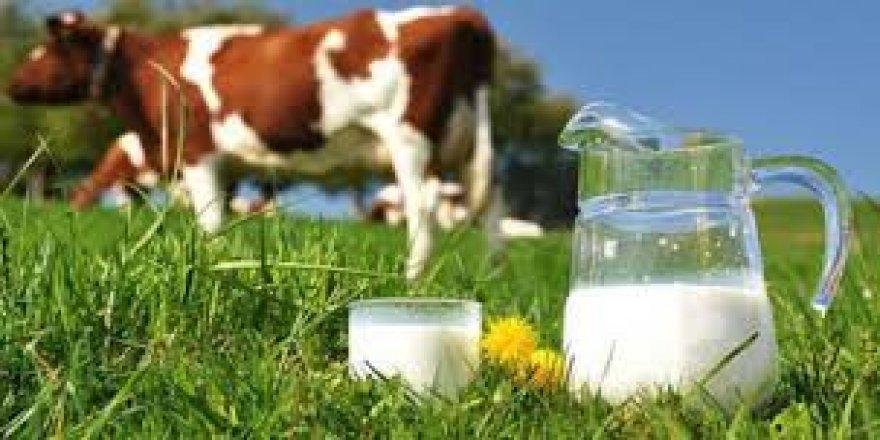 Toplanan İnek Sütü Miktarı Eylül'de Arttı