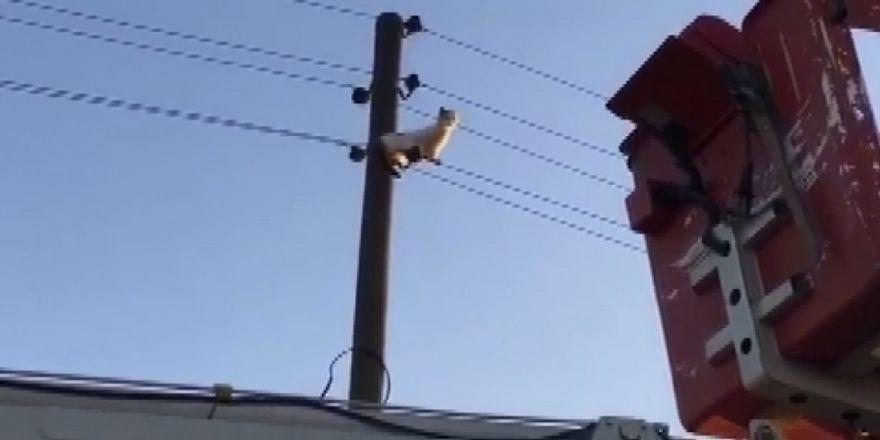 Yaramaz Kediyi İtfaiye Kurtardı