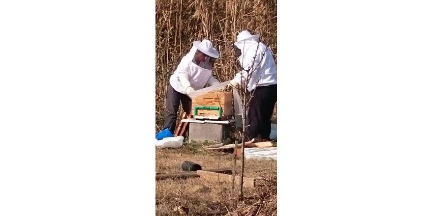 Kent Bostanları'nda Çiçek Balı Üretildi