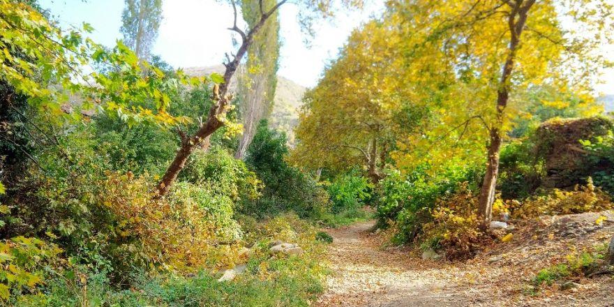 Ganos Ormanlarında Sonbahar