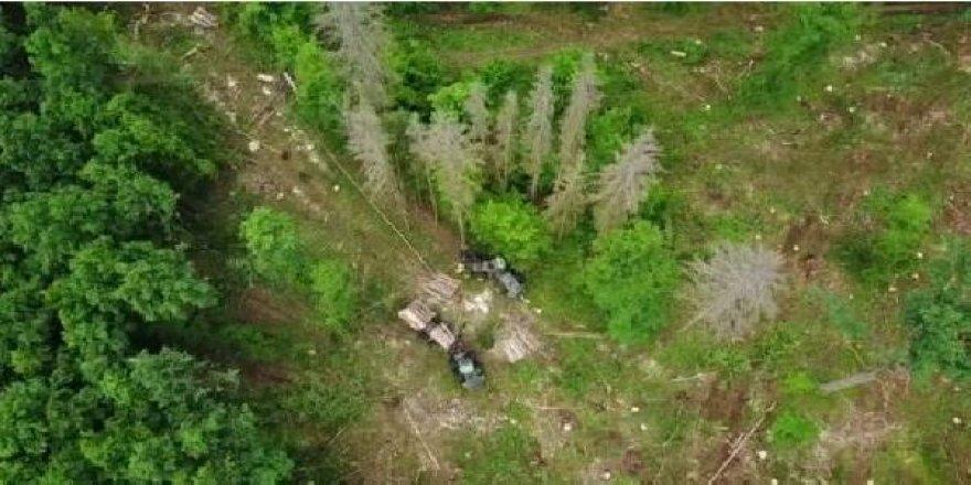 AB'den Polonya'ya ağaç kesme cezası
