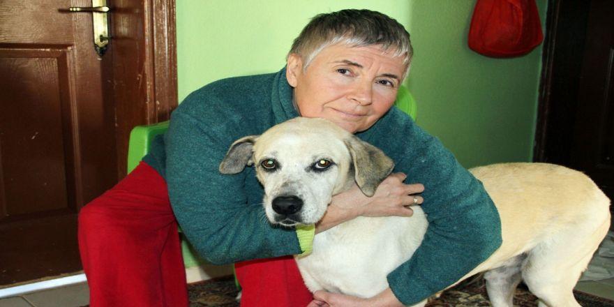 Kredi Çekti, Arabasını Satıp Hayatını Köpeklere Adadı