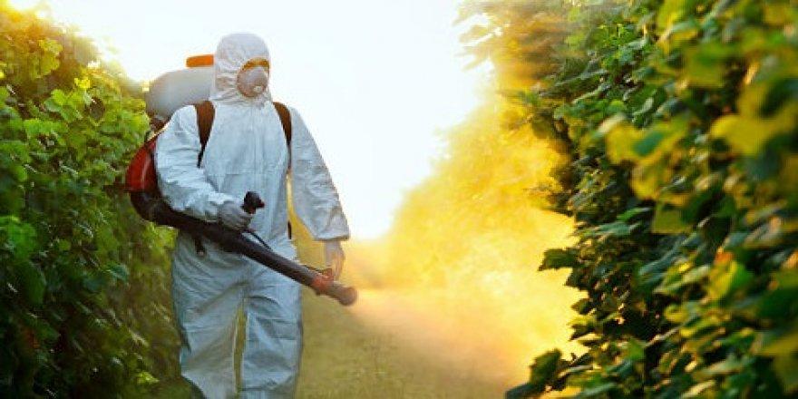 Böcek İlaçlama Hizmeti Almadan Önce Bilmemiz Gereken 5 Şey