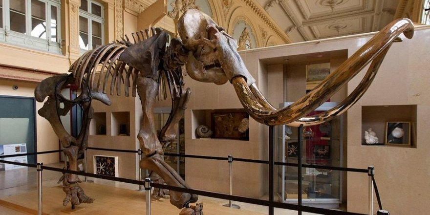 15 bin yıllık mamut iskeleti alıcısını bekliyor