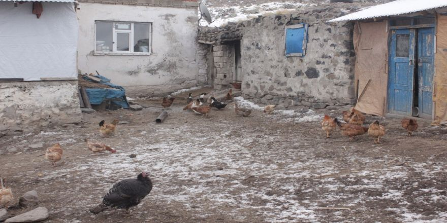 Bin Kanatlı Hayvan İtlaf Edildi