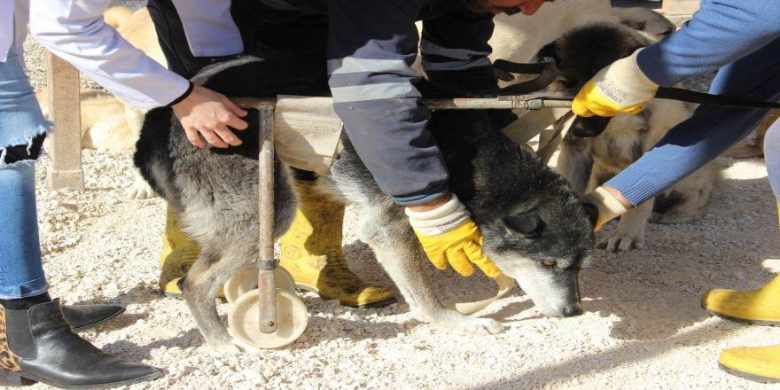 Engelli Hayvanlar Burada Yaşama Tutunmaya Çalışıyor