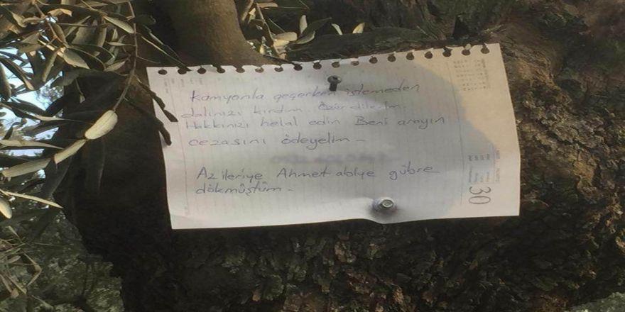 Zeytin ağacına astığı not duygulandırdı