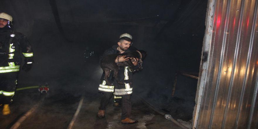 Denizli'de 4 iş yerinin kül olduğu yangında köpek mahsur kaldı