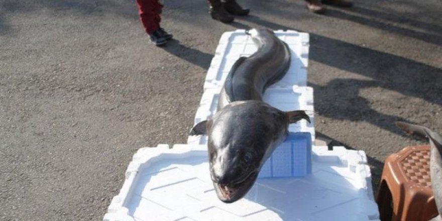 Balıkçıların ağına canavar takıldı
