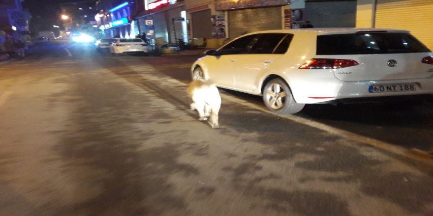 Başıboş dolaşan köpekler korku salıyor