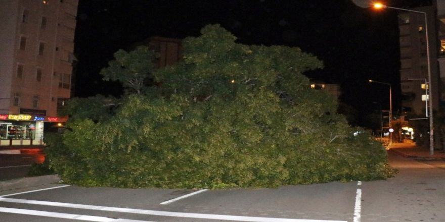 Şiddetli rüzgar ağaçları kökünden söktü!