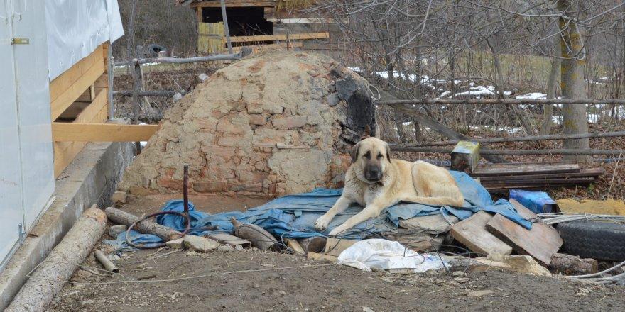 Köpeklerin enkazdan ayrılmaması, adeta katliamı anlatmış