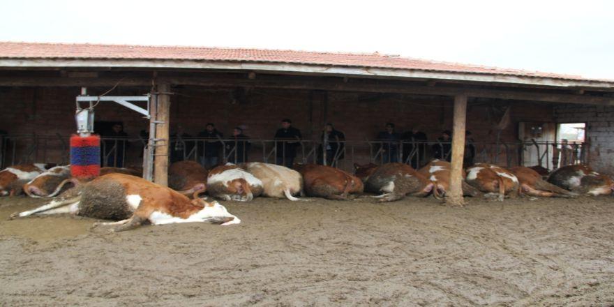 Elektrik akımına kapılan 14 hayvan telef oldu