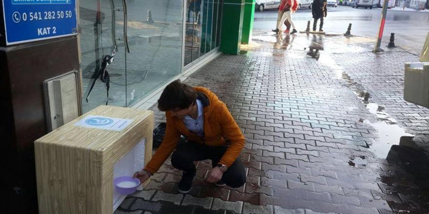 Ülkü Ocakları Sokak hayvanları için yuva projesi başlattı