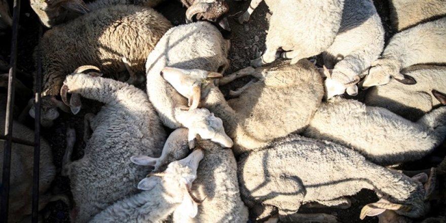 Köyüne dönene 300 koyun ve maaş