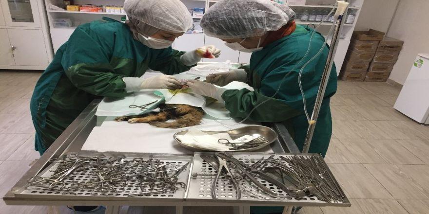 Kediye yapılan operasyonla 400 gramlık tümörü alındı