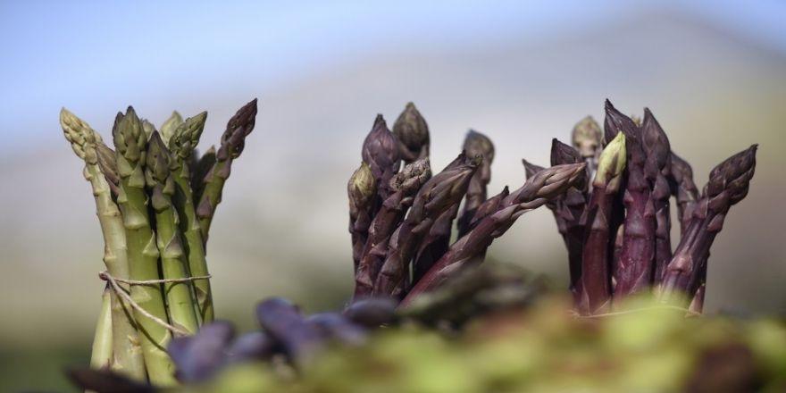 """""""Kuşkonmaz"""" bitkisinin üretiminde yeni dönem!"""