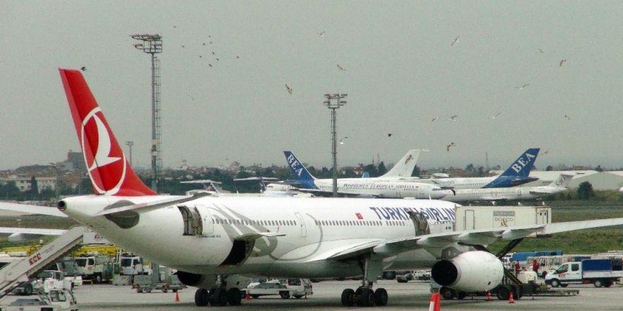 Atatürk Havalimanı'nda yemek yüklenen uçağa martılardan yoğun ilgi