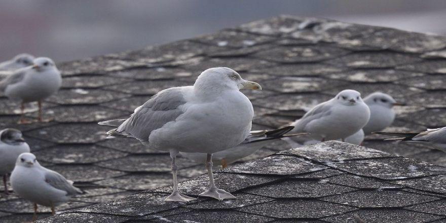 306. kuş türü kaydedildi