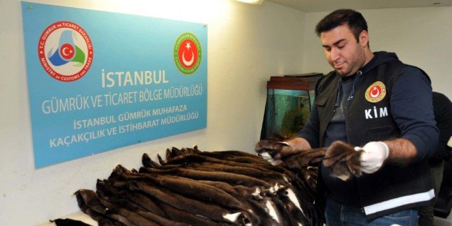 Atatürk Havalimanı'nda kaçak kürk yakalandı