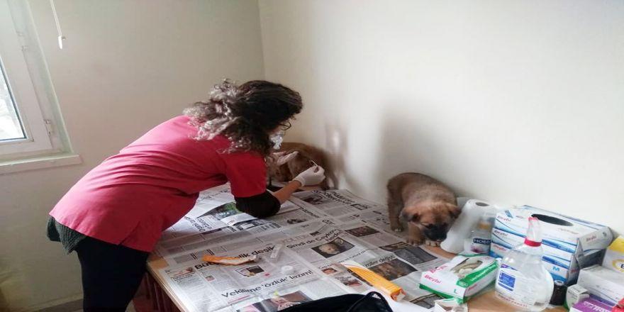 Çaya düşen köpek, itfaiye ekiplerince kurtarıldı