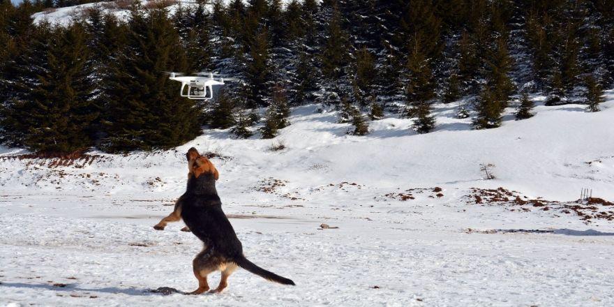 Drone saldıran köpek gülümsetti